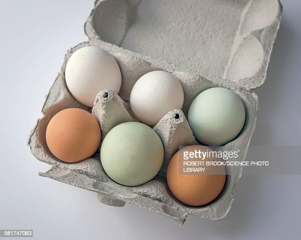Egg pigmentation
