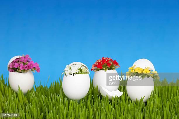 Egg Shell Garden of Kalanchoe Flowers