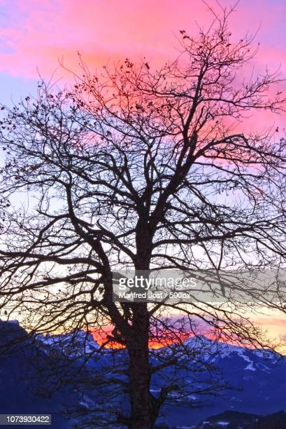 egger baum - baum stock pictures, royalty-free photos & images
