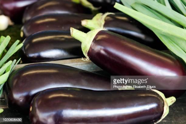 eggplant aubergine solanum melongena - eggplant stock pictures, royalty-free photos & images
