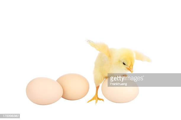 Eggs and chicken isolated on a white background