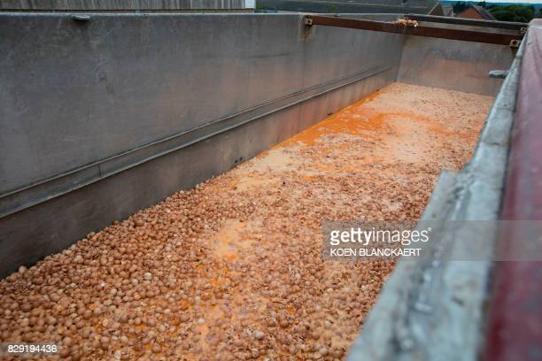 Eggs are destroyed at a chicken farm in Nadrin Houffalize on August 9 2017 Dutch and Belgian investigators launched joint raids on August 10 2017...