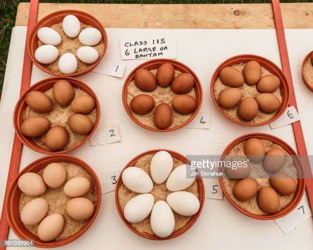 eggs at henley country show - jim donahue stock pictures, royalty-free photos & images