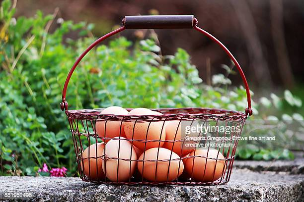 eggs in a basket - gregoria gregoriou crowe fine art and creative photography. stockfoto's en -beelden