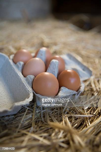 Eggs in a box with straw