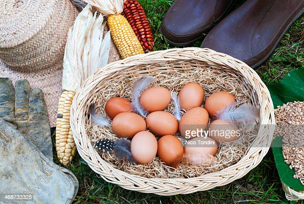 eggs in a farm - indian corn stock photos and pictures