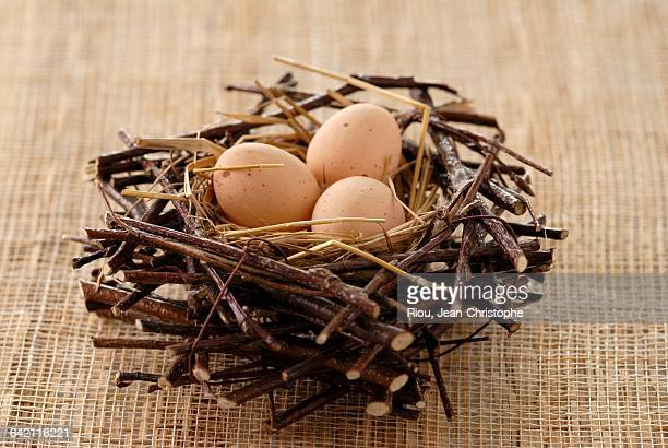 eggs in a nest - vorbeigehen stock pictures, royalty-free photos & images