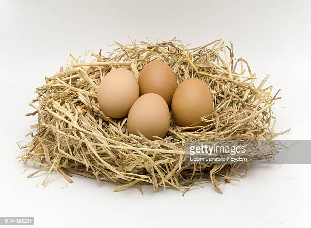 Eggs In Nest On White Background