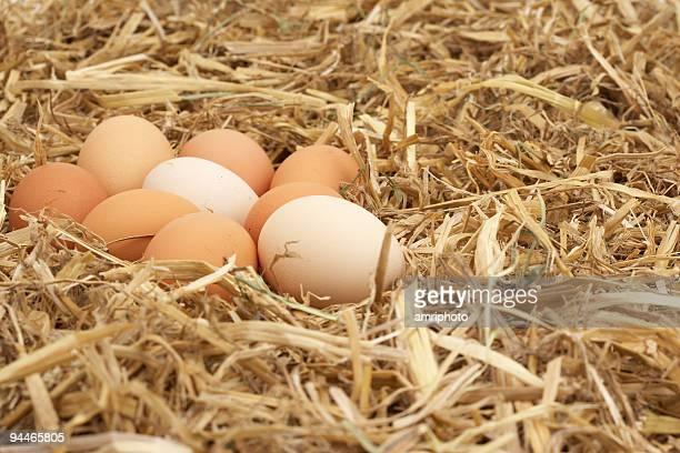 Eier in weichem Stroh nest