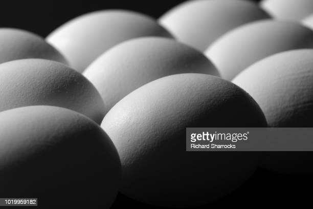 eggs - chicken bird stock pictures, royalty-free photos & images