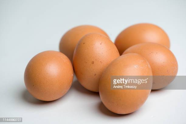 eggs - animal egg stock pictures, royalty-free photos & images