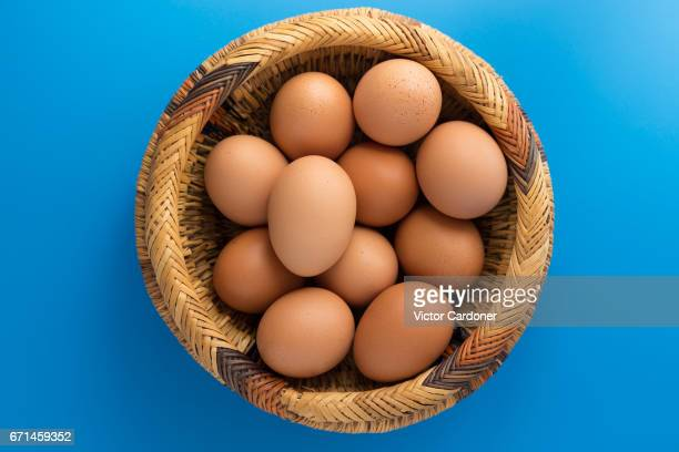 eggs - huevo etapa de animal fotografías e imágenes de stock