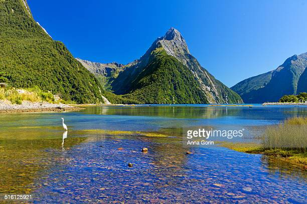 egret at milford sound, new zealand - international landmark stock pictures, royalty-free photos & images