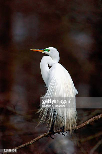 """""""egret"""" bride - lafayette louisiana stock pictures, royalty-free photos & images"""