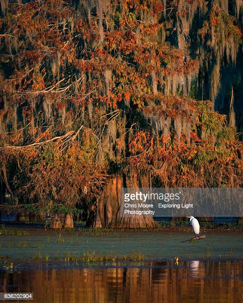Egret in Autumn