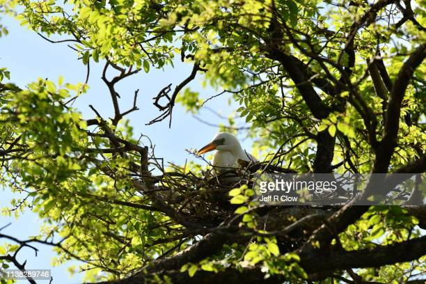 egret in the nest at the rookery in dallas - rookery stock pictures, royalty-free photos & images
