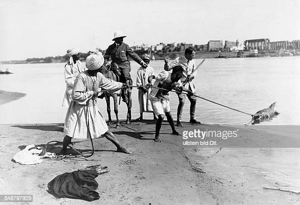 Egypt catching a crcodlie on the river Nile 1929 Photographer Frankl Vintage property of ullstein bild