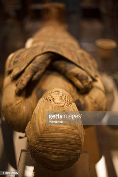 egypt, egyptian mummy at a museum - mummy - fotografias e filmes do acervo