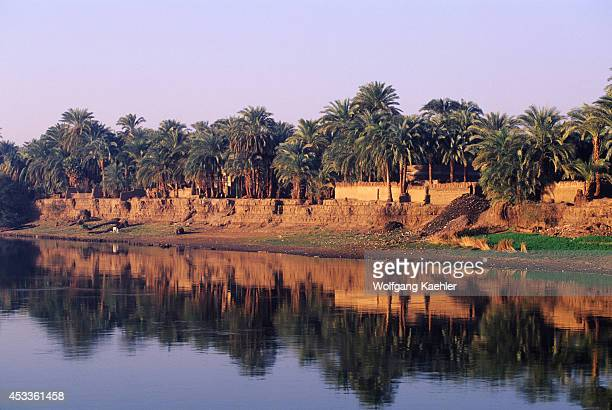Egypt Nile River Between Luxor And Dendera Reflections Of Date Palm Trees