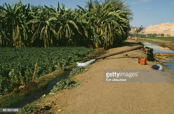 Egypt Nile Valley Farming Irrigation pump working by field of beans and banana plantation