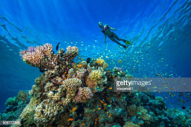 egypt, red sea, hurghada, young woman snorkeling at coral reef - reef stock pictures, royalty-free photos & images
