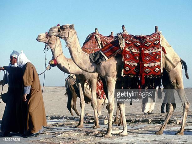 CONTENT] Egypt Sahara desert Bedouins caravan trought Sinai