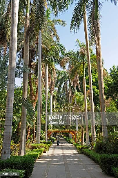 Egypt Upper Egypt Aswan - Botanical garden on the Nil island Kitchener, royal palms at the main path