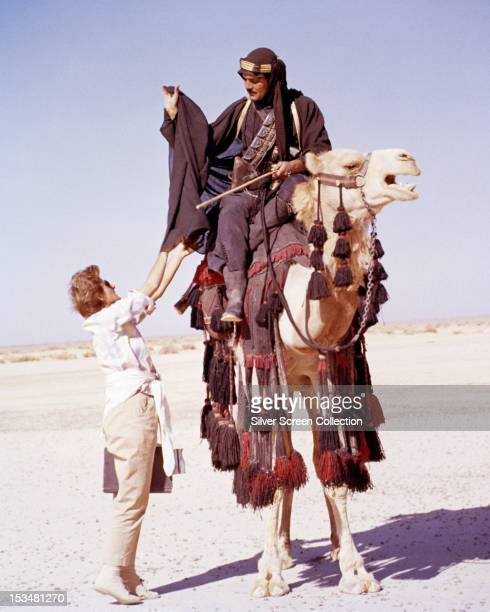 Egyptian actor Omar Sharif is assisted by a crew member as he rides a camel during location filming for 'Lawrence Of Arabia' directed by David Lean...