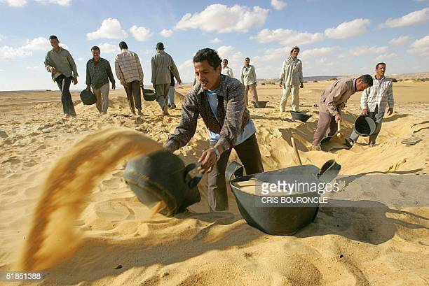 Egyptian antiquities workers excavate 12 December 2004 in the desert of the Valley of the Golden Mummies in the Bahariya oasis 375 kms west of Cairo...