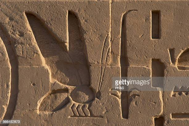 Egyptian Art. The Karnak Temple Complex. Relief depicting a bee and a rush symbols of Lower and Upper Egypt. New Kingdom, Egypt.