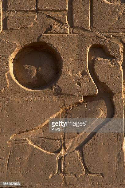 Egyptian Art The Karnak Temple Complex Relief depicting a goose next to the sun New Kingdom Egypt