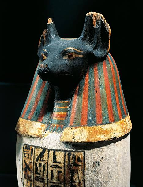 Canopic Vase Of Padiuf Priest Of Amon Duamutef In Dog Form