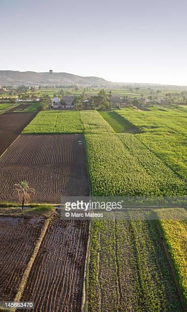 egyptian fields viewed from balloon - marc mateos fotografías e imágenes de stock