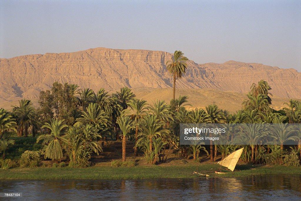 Egyptian landscape : Stockfoto