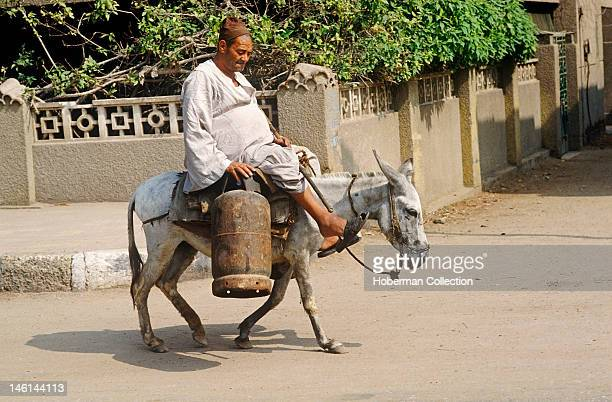 Egyptian Man on Donkey
