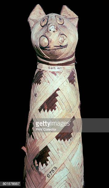 Egyptian mummy of a cat from the British Museum's collection