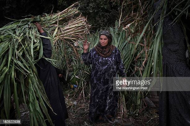 Egyptian women buy feed for their farm animals in the village of Maymonia, in Upper Egypt, Thursday, Sept. 19, 2013. Maymonia was one of many...