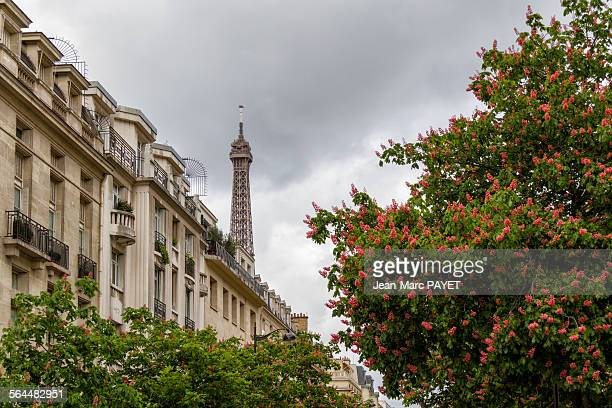 eiffel tower, flowers and apartment building - jean marc payet stock pictures, royalty-free photos & images