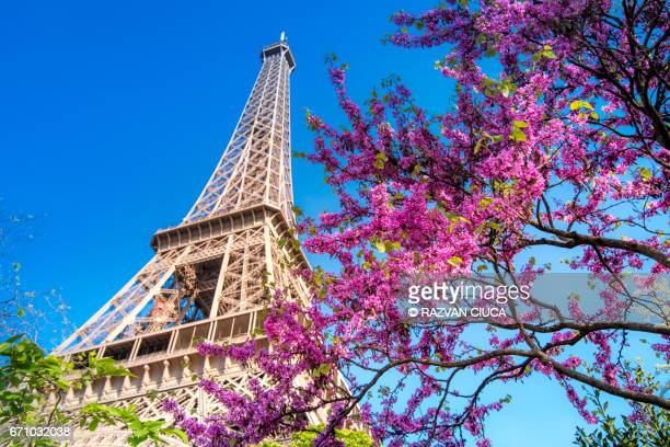 eiffel tower - eiffel tower stock photos and pictures