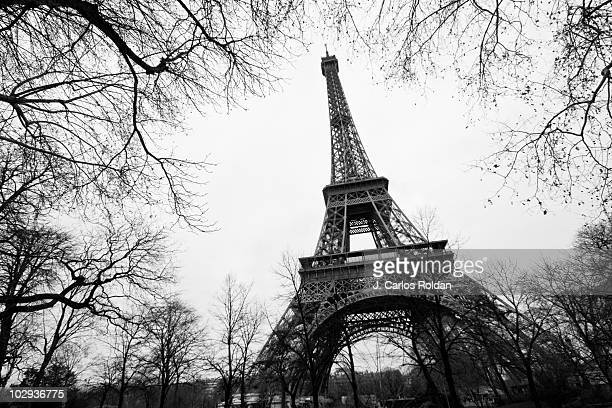 Eiffel Tower surrounded by tree branches
