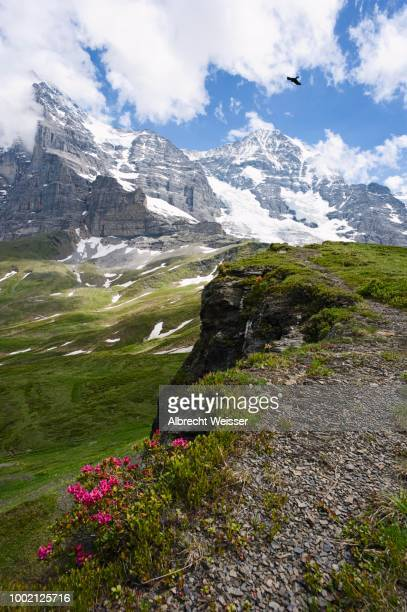 Eiger and Moench mountain with Eismeer slope and glacier, Switzerland
