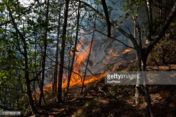 Eight hundred hectares of mountain gone up in smoke in LAquila Italy on 3 August fire 200 meters from the town Eight hundred hectares of mountain...