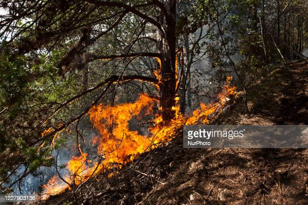 Eight hundred hectares of mountain gone up in smoke in LAquila, Italy, on 3 August fire 200 meters from the town. Eight hundred hectares of mountain...