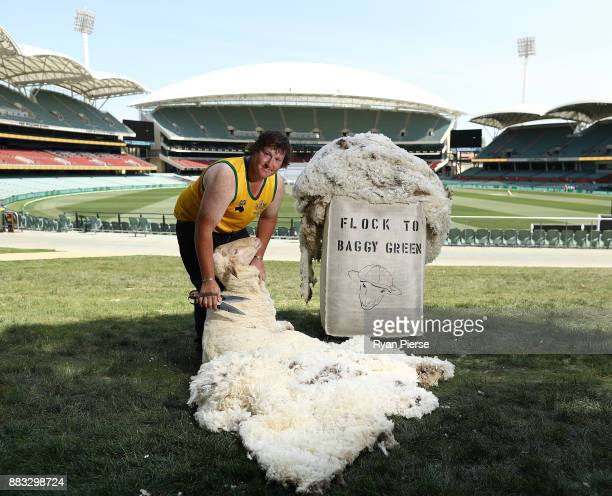 Eight times Australian Blade Shearing Champion John Dalla Champion shears a sheep at Adelaide Oval on November 30 2017 in Adelaide Australia Flock to...
