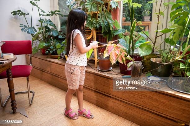 eight year old girl spraying plants - lucy lambriex stockfoto's en -beelden