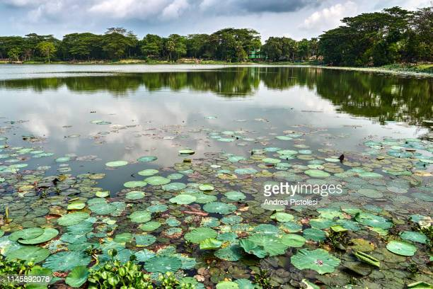 eighty domes mosque pond, bangladesh - pequeno lago - fotografias e filmes do acervo