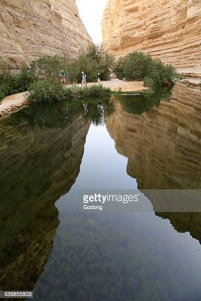 ein avdat canyon - historical palestine stock pictures, royalty-free photos & images
