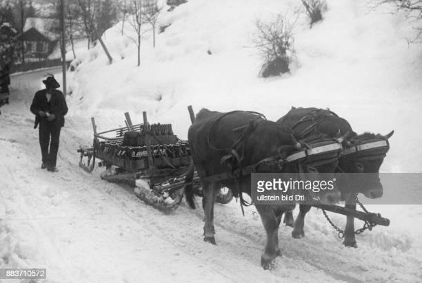 Ein Bauer mit einem Schlitten der von zwei Rindern gezogen wird Originalaufnahme im Archiv von ullstein bild