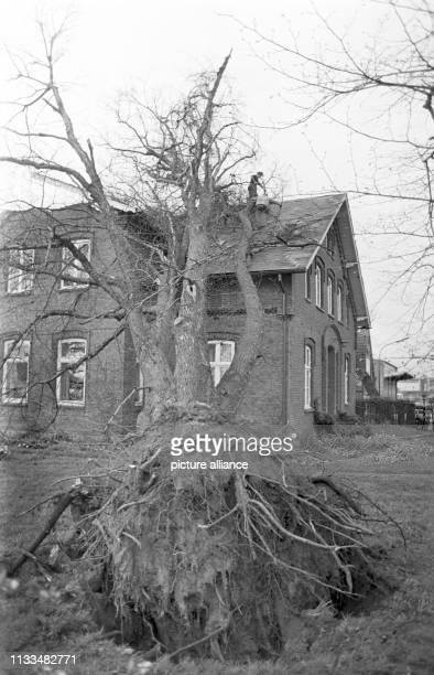 Ein durch das Unwetter entwurzelter Baum liegt am auf einem Mehrfamilienhaus in Kiel-Russee am . Ein Tornado war am späten Nachmittag des über die...