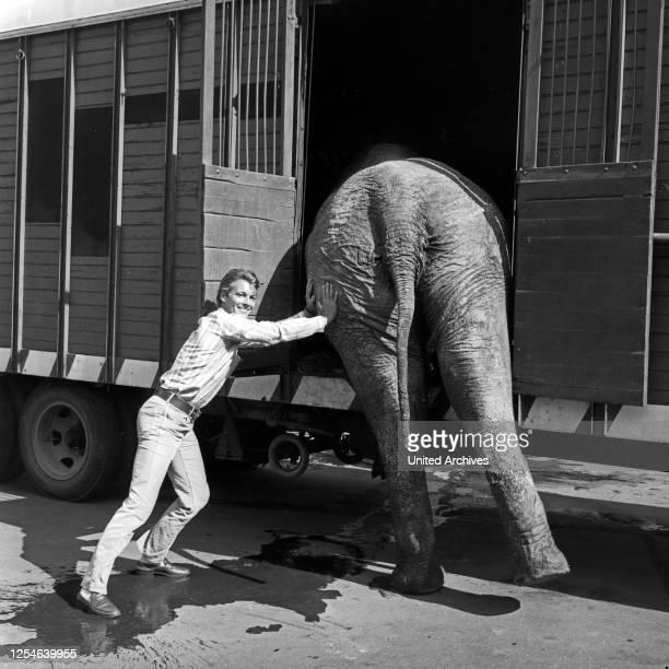 Ein Elefant auf dem Weg ins Studio des ZDF in Hamburg, Deutschland 1960er Jahre.